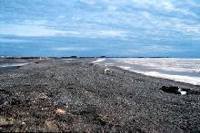 The beach at Tuktoyaktuk, with the Beaufort Sea still frozen over