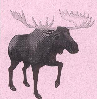 The story of how Moose got one of his most distinctive features - Wolf Willow Cottage, Yukon