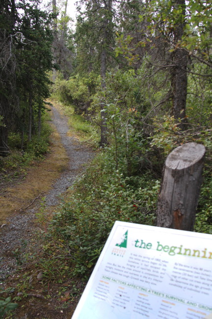 Spruce Beetle Trail Recreation Site, Yukon
