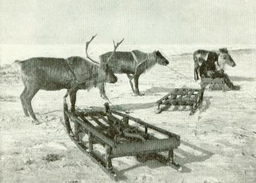 Reindeer and sleds on the ice