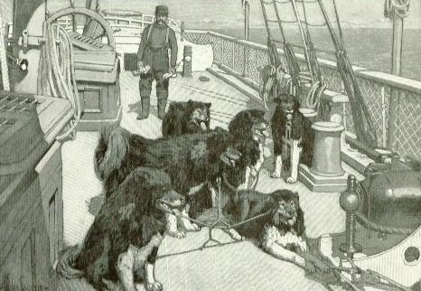 The surviving dogs aboard the ship after the long trip