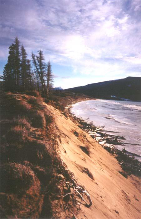 The dunes near the Watson River are being eroded quite dramatically during the storms that occur in the early summer when the water level in Lake Bennett is at its highest - Carcross, Yukon