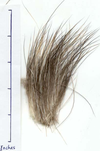 A photo of moose hair