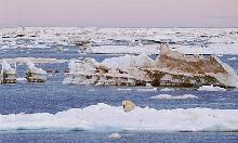Photo of a polar bear in the Chukchi Sea