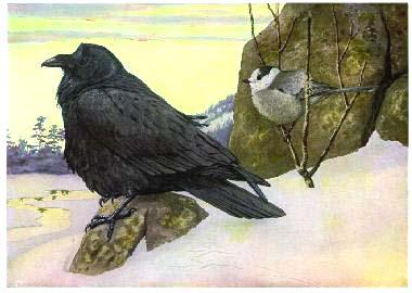 A raven and a Canada Jay in the winter