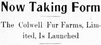 Now Taking Form - The Colwell Fur Farms, Limited, Is Launched, April 1914