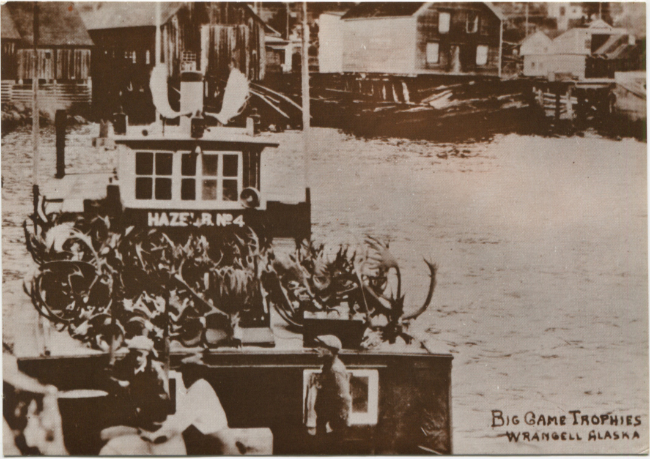 Postcards by the R. J. Calvert Company - NPC-1253: Wrangell, Alaska. Big Game Trophies. [with Stikine River boat Hazel B. No. 4]