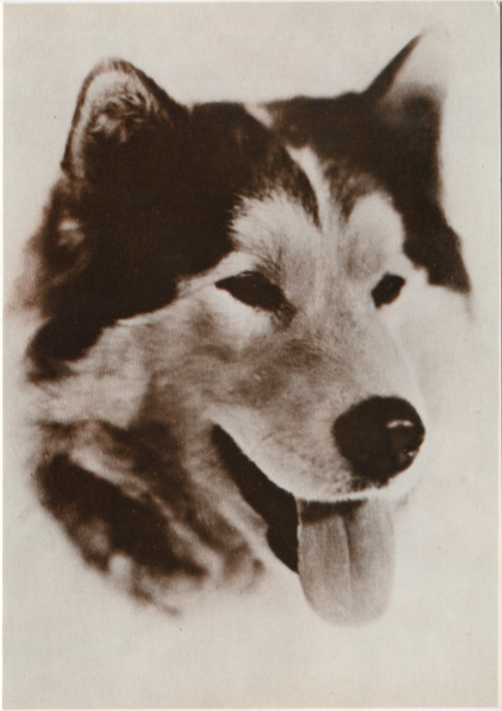 Postcards by the R. J. Calvert Company - NPC-1260: Alaska Husky