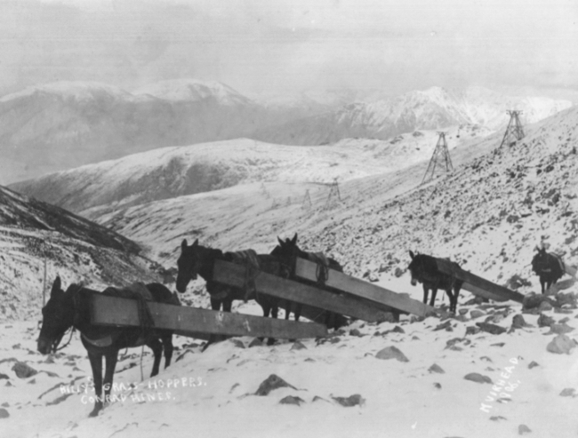 Horses hauling timbers from the Mountain Hero aerial tramway to the Big Thing Group.