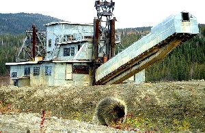 A porcupine visits the Pedro Gold Dredge!