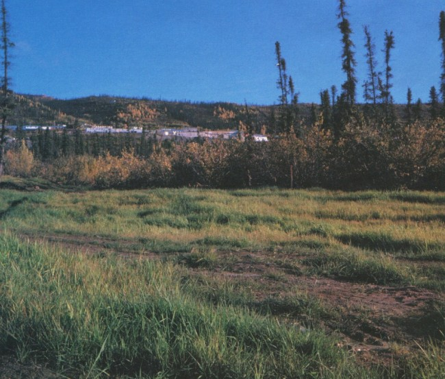 Revegetation of Elsa tailings pond, 1980.