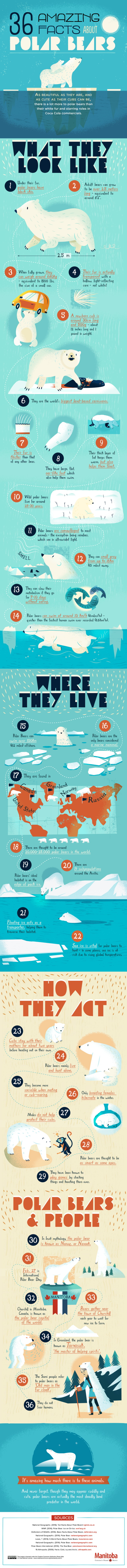 36 Amazing Facts About Polar Bears Bear