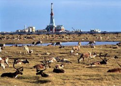 Caribou and oil rig on the Alaska's North Slope