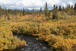 Fall colors on the Canol Road, Yukon Territory