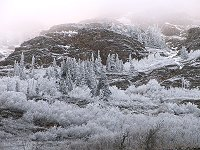 Hoar frost along Windy Arm, Yukon