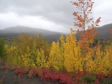 Fall colors along the North Klondike Highway, Yukon