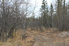 The Old Dawson Road at Km of the North Klondike Highway, Yukon