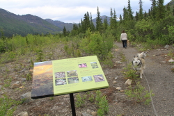 Beaver Pond Trail at the Tombstone Interpretive Centre