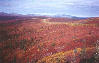 The fall colors on the Top of the World Highway in Canada's Yukon Territory are a photographer's dream come true - and fall comes very early here!