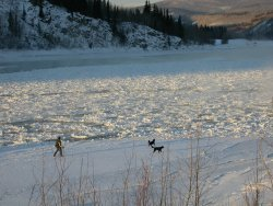 A winter dog-walk in Dawson City, Yukon