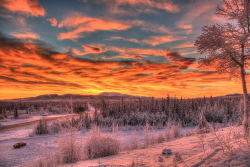Spectacular winter sunrise along the Alaska Highway at Whitehorse