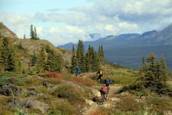 Mountain biking on Grey Mountain at Whitehorse, Yukon